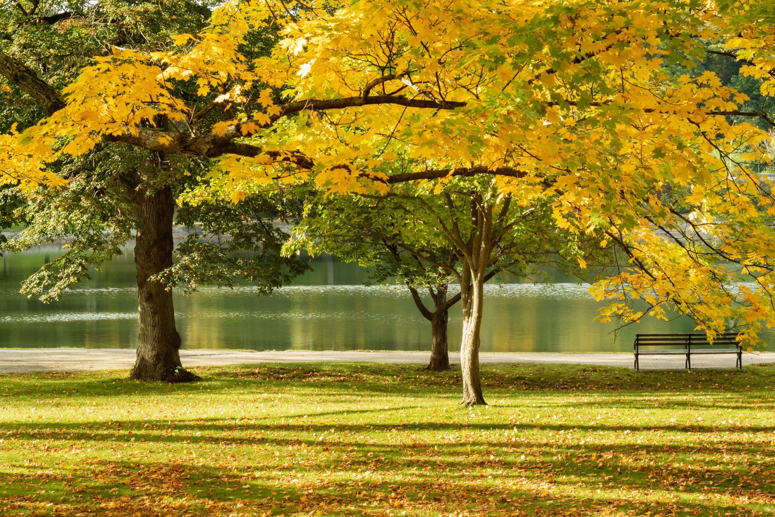 Brookline, MA Park