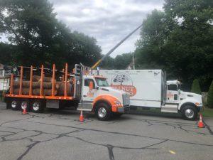 Walnut Tree Truck with Logs