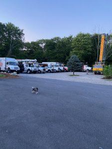 Puppy Walnut Tree Trucks