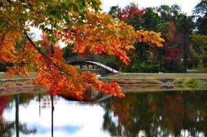 Newton, MA Pond