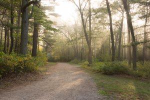 Milton, MA Trees