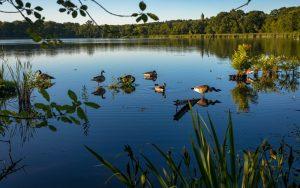 Needham, MA Pond & Trees