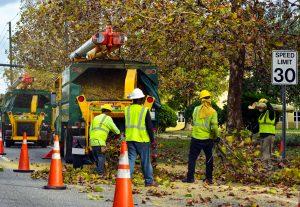 Tree Storm Damage Service