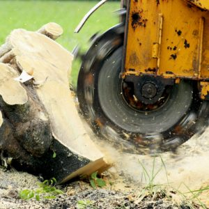 Stump Grinding being performed