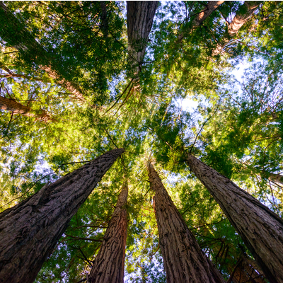 Tall Trees outside