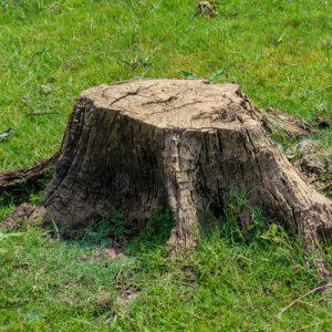 Tree stump in a yard